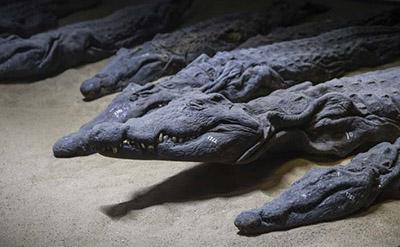 Croc museum.jpg